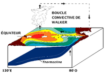 « Circulation de Walker » par Pierre cb from original by NOAA — Translated version of NOAA. Sous licence Public domain via Wikimedia Commons - http://commons.wikimedia.org/wiki/File:Circulation_de_Walker.png#mediaviewer/File:Circulation_de_Walker.png